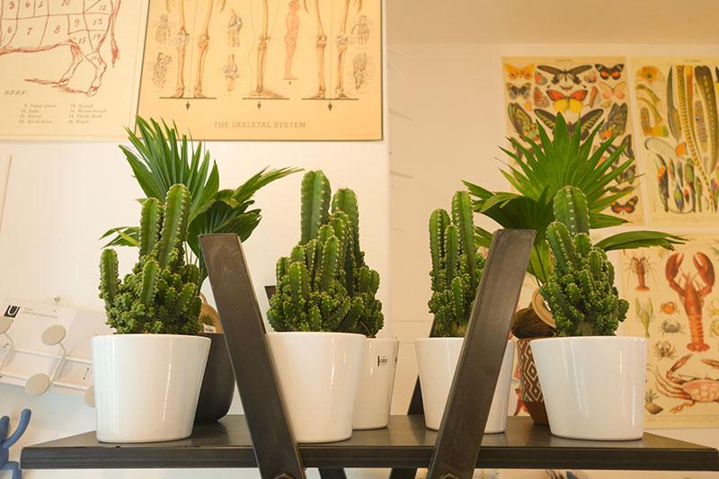 Cactus boutique [la suite…] à Blois